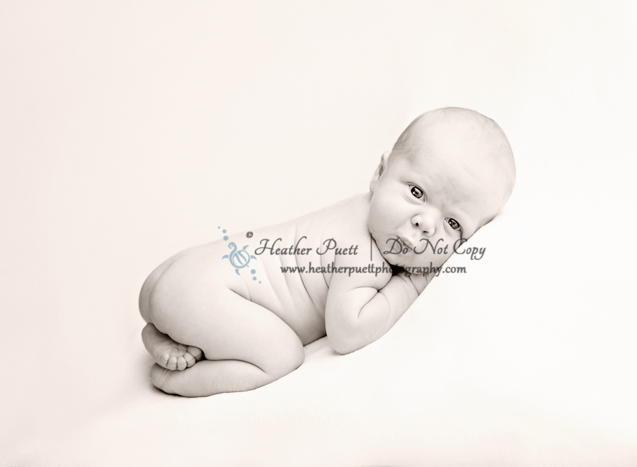 Marysville Washington Newborn Photographer, Marysville Washington Photographer